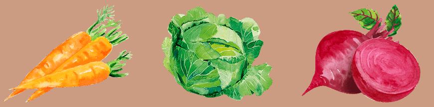 Gemüse Erleben - Trenner neu