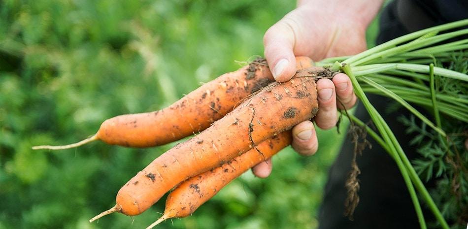 Gemüse Erleben - Gemüsesäfte von Voelkel - Banner