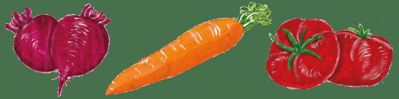 Gemüse Erleben - Trenner