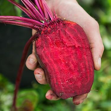 Samenfestes Gemüse Teaserbild